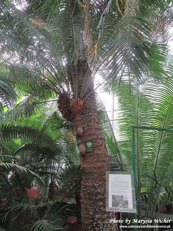 Ogród Botaniczny Uniwersytetu Jagiellońskiego w Krakowie