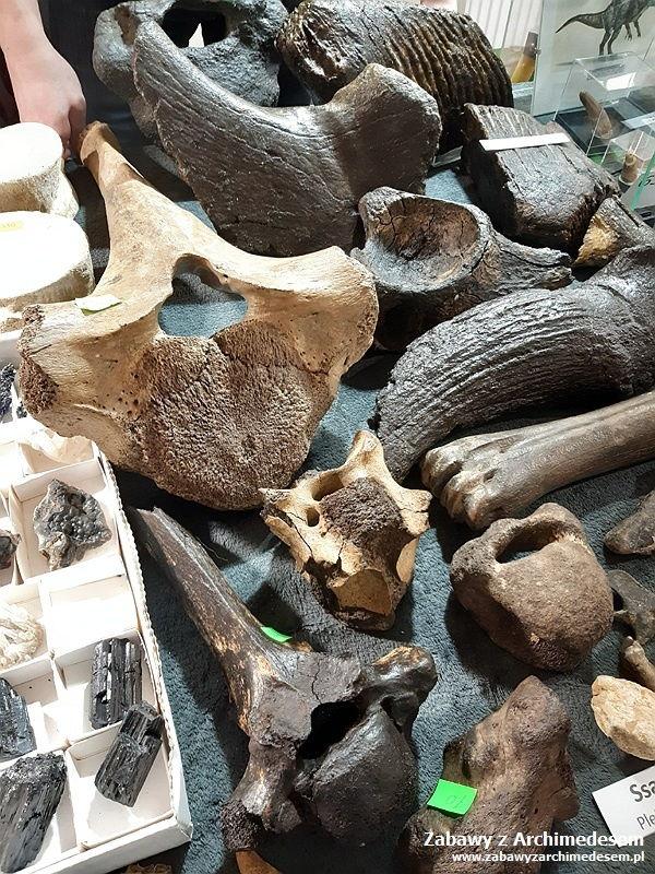 kolekcjonerska giełda minerałów i skamieniałości