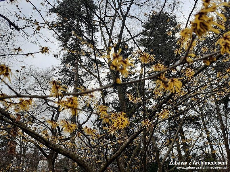 Wiosna wobiektywie Marysi