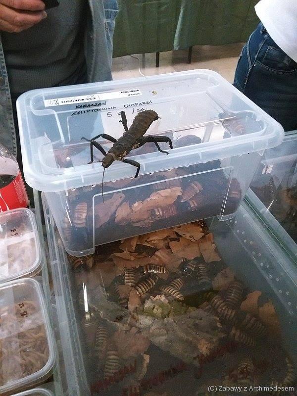 dzień owada